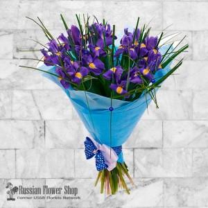 Ukraine Frühlingsblumen #4